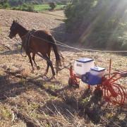 Plantadeira Tração Animal